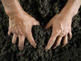 На оценке сельскохозяйственных земель украли 42 млн гривен бюджетных средств